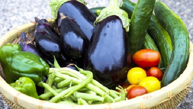 はじめての野菜作り