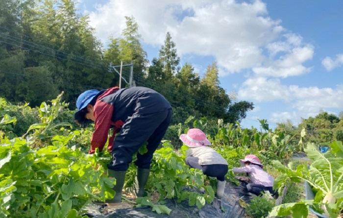 貸し農園 市民農園 体験農園