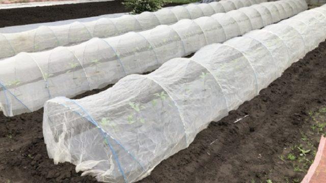 無農薬栽培と有機栽培
